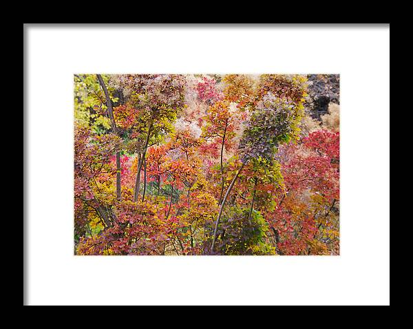 Colored Framed Print featuring the photograph Colored Pallet Smoke Trees by Mike and Sharon Mathews