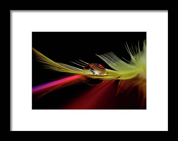 Drop Framed Print featuring the photograph Colors In The Drop by Aida Ianeva
