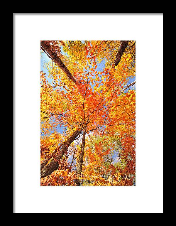 Portrait Framed Print featuring the photograph Colors Of Leaves Yellows Oranges 2884 by Marie Fierek