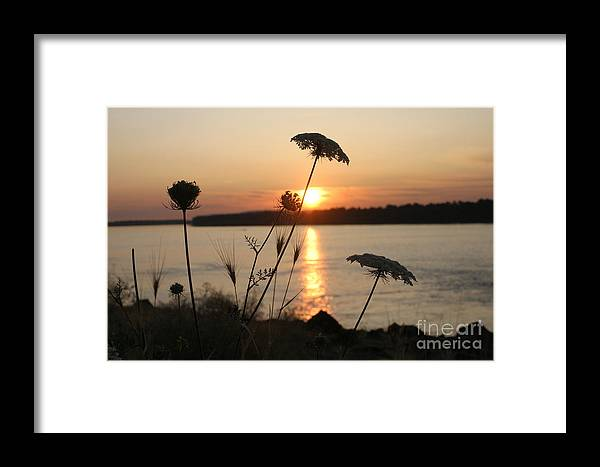 Queen Anne's Lace Framed Print featuring the photograph Columbia Gorge Sunset by Cari Gesch