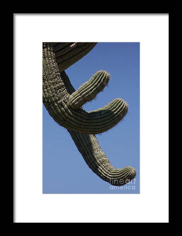 Saguaro Framed Print featuring the photograph Come Hither by Kathy McClure