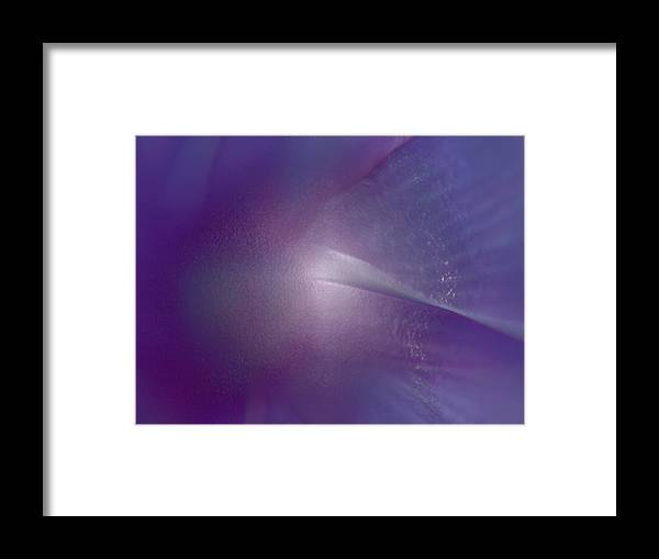 Flower Framed Print featuring the photograph Comet by Tera Michaels