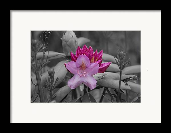 Flower Framed Print featuring the photograph Coming To Life by Aimee L Maher Photography and Art Visit ALMGallerydotcom