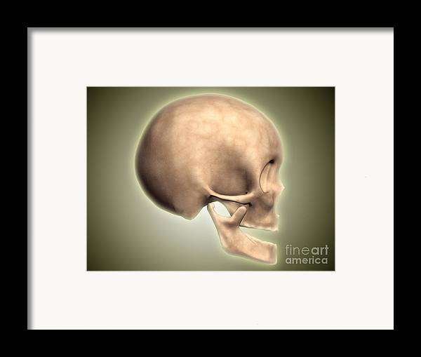Biomedical Illustrations Framed Print featuring the digital art Conceptual Image Of Human Skull, Side by Stocktrek Images