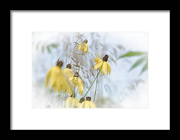 Coneflower Framed Print featuring the photograph Coneflower And Bee 1 by Susan McMenamin