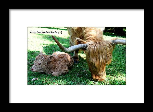 Cow Framed Print featuring the photograph Congrat's by Kathy Sampson