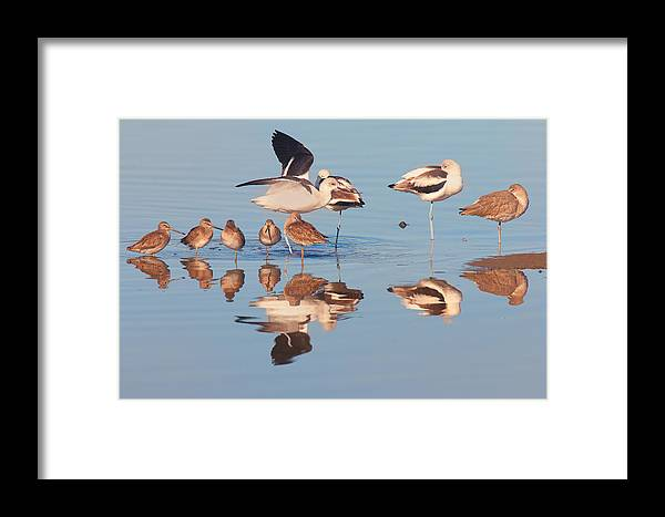 Congregation Framed Print featuring the photograph Congregation by Ram Vasudev