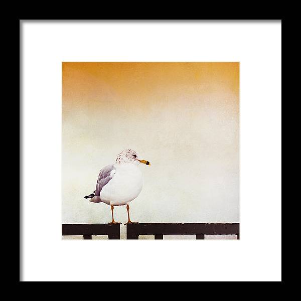Seagull Framed Print featuring the photograph Contemplation by Carolyn Cochrane