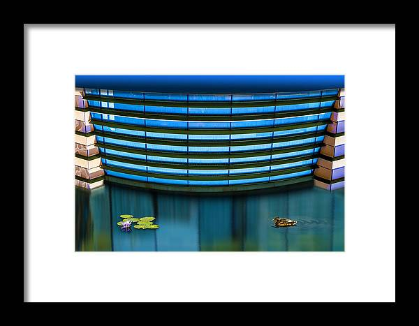 Photography Framed Print featuring the photograph Contented by Paul Wear