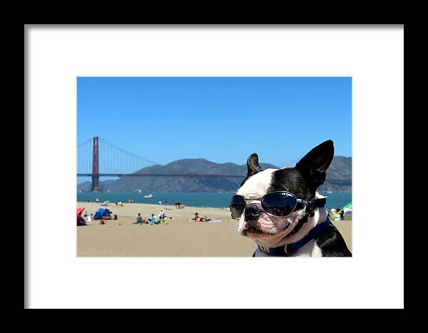 Dog Framed Print featuring the photograph Cool by Rosemary Bliss