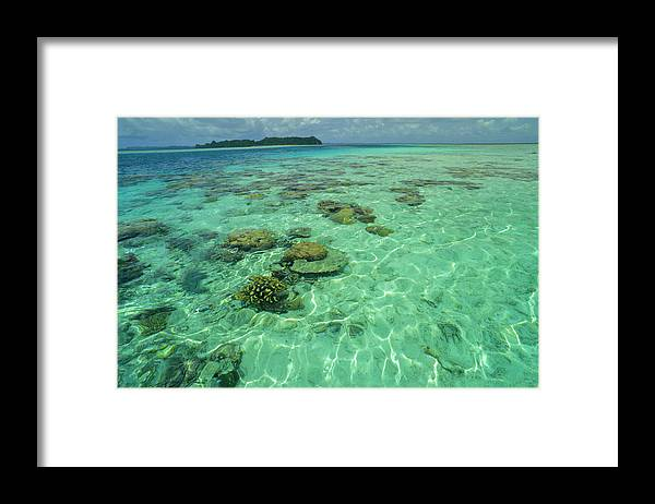 Water's Edge Framed Print featuring the photograph Coral Paradise by Tammy616