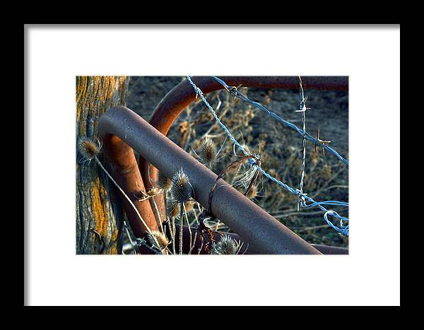 Fencing Framed Print featuring the photograph Coralled In Texture by Kim Hymes