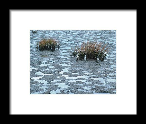 Flora Framed Print featuring the photograph Cord Grass At Low Tide In San Francisco Bay by Scott Lenhart