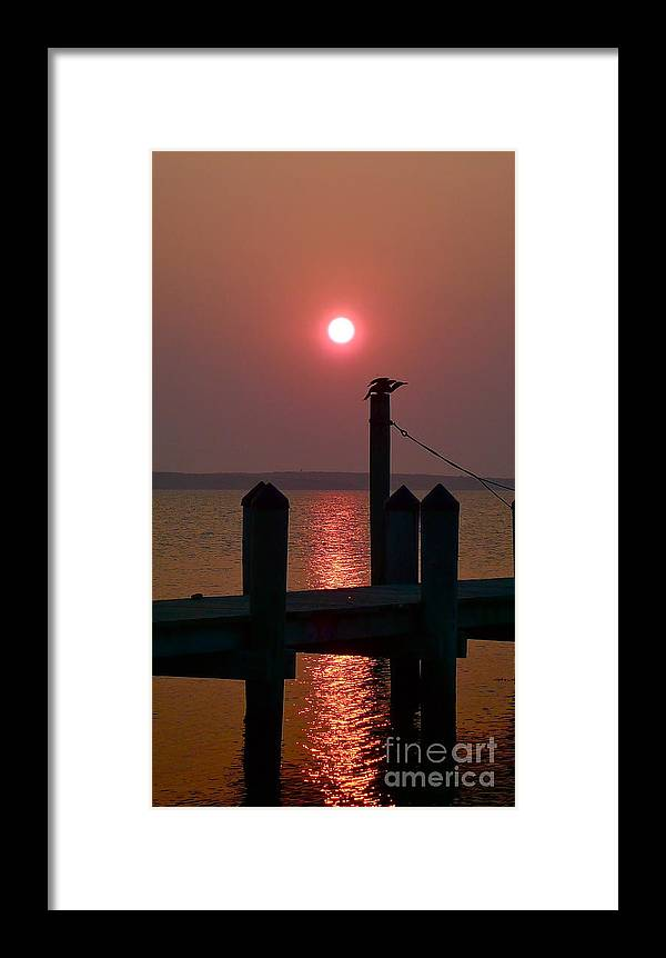 Ocean Framed Print featuring the photograph Cormorant At Dawn Drying Its Wings by Matt Dana