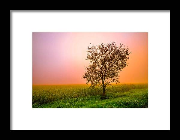 Framed Print featuring the photograph Cornfield Colors by Brian Stevens