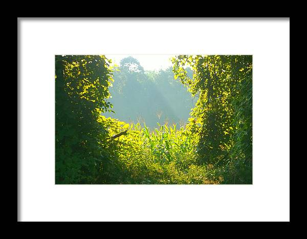 Beautiful Rural Scene Framed Print featuring the photograph Cornfield In The Morn IIi by Sylvia Herrington