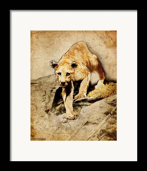 Puma Framed Print featuring the digital art Cougar Hunting by Ray Downing