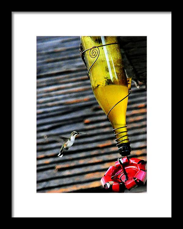 Black Wings Framed Print featuring the photograph Country Hummer2 by Leon Hollins III
