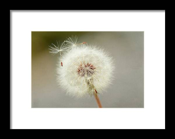 Dandelion Framed Print featuring the photograph Couple Of Strays by Fraida Gutovich