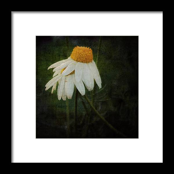 Flower Framed Print featuring the photograph Covered by Heike Hultsch