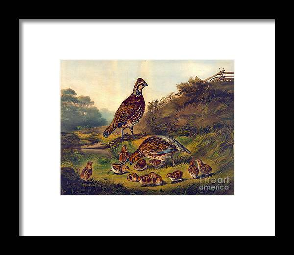 Covey 1856 Framed Print featuring the photograph Covey 1856 by Padre Art