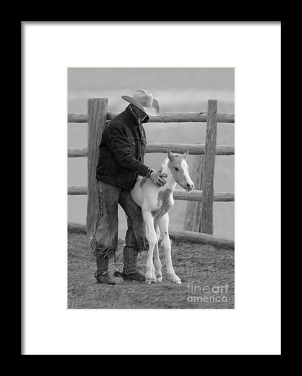 Horse Framed Print featuring the photograph Cowboy Steadies Foal by Carol Walker