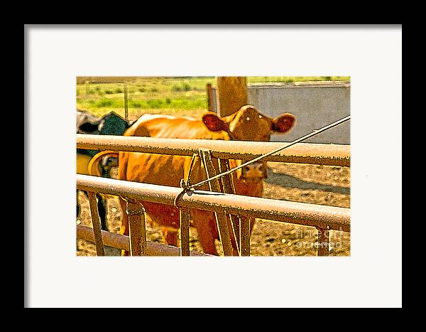 Cow Art Photographs Framed Print featuring the photograph Cows Coming Home by Artist and Photographer Laura Wrede