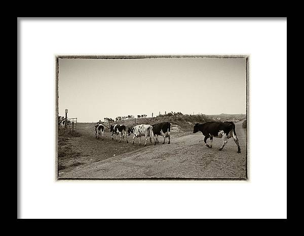Cows Framed Print featuring the photograph Cows by Wade Aiken