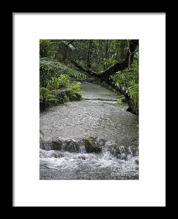 Jamaica Framed Print featuring the photograph Coyaba River Gardens 6 by Nancy L Marshall