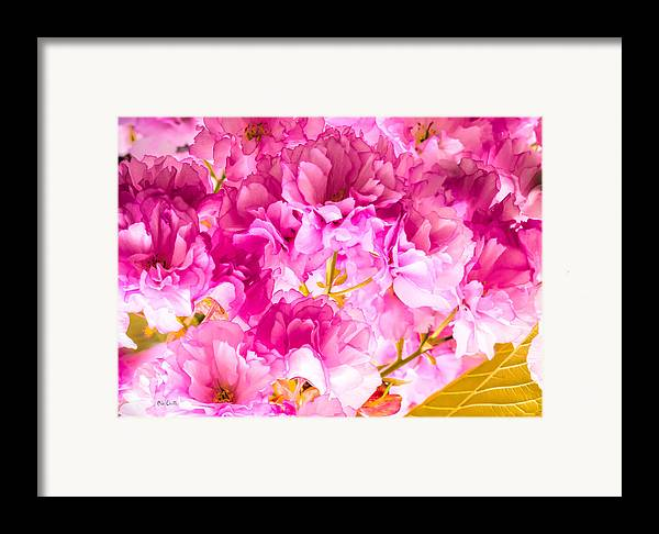 Abstract Framed Print featuring the photograph Crabapple Impressions 2 by Bob Orsillo