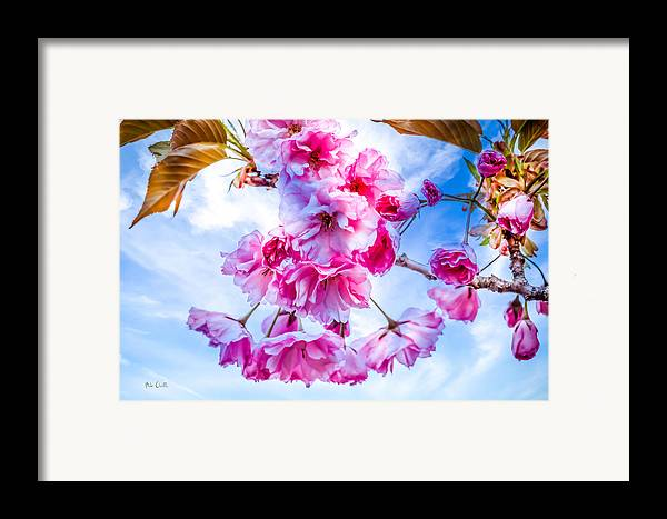Crab Apple Framed Print featuring the photograph Crabapple Impressions by Bob Orsillo