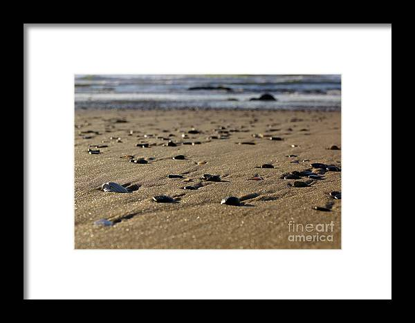 Shell Framed Print featuring the photograph Crab's Eye View by Cassandra Buckley