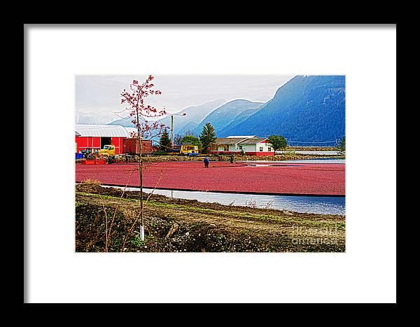 Workers Framed Print featuring the photograph Cranberry Field Workers by Randy Harris