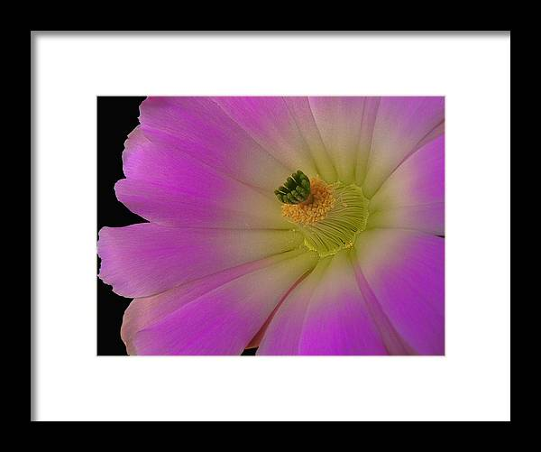 Crawling Alicoche Framed Print featuring the photograph Crawling Alicoche by James Capo