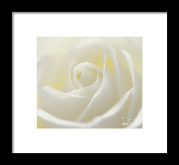 Rose Framed Print featuring the photograph Creamy White by LHJB Photography