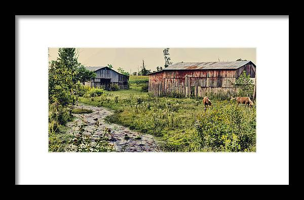 Rural Framed Print featuring the photograph Creekside by Heather Applegate