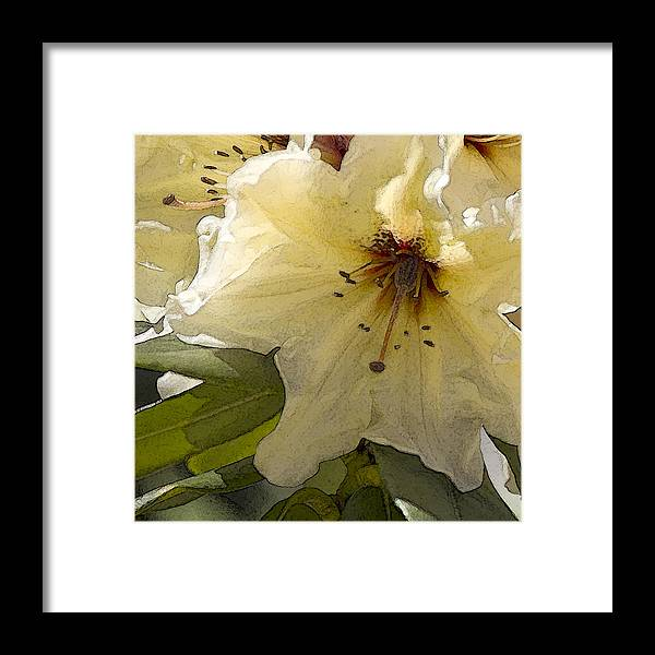 Lily Framed Print featuring the photograph Creme Rhody by Stephen Prestek