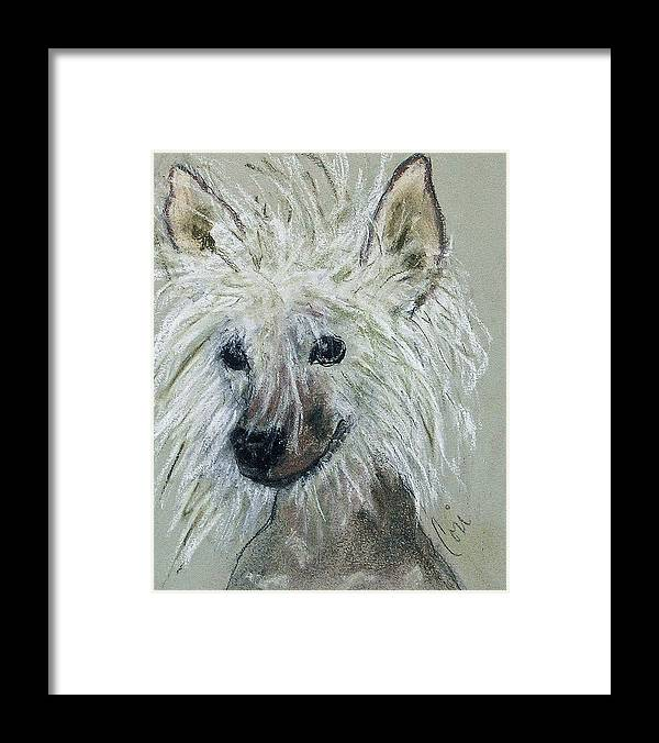 Chinese Crested Framed Print featuring the drawing Crested Star by Cori Solomon