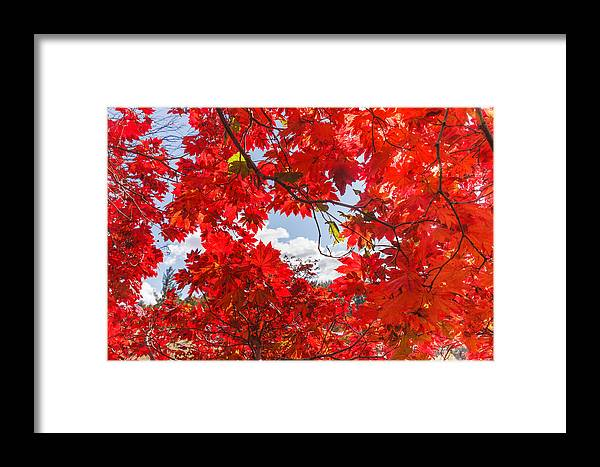 Background Framed Print featuring the photograph Crimson Red Leaves Background by Carol VanDyke