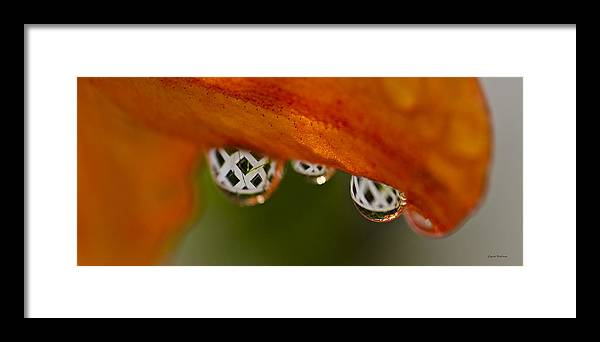 Raindrops Framed Print featuring the photograph Criss Cross Water Drop by Crystal Wightman