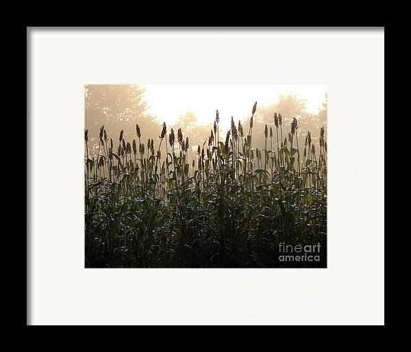 Corn Framed Print featuring the photograph Crops In Fog by Olivier Le Queinec