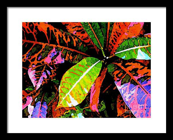James Temple Framed Print featuring the photograph Croton by James Temple