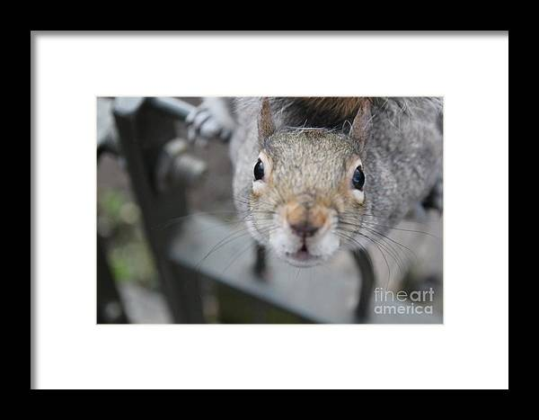 Curious Framed Print featuring the photograph Curious by Jasna Buncic