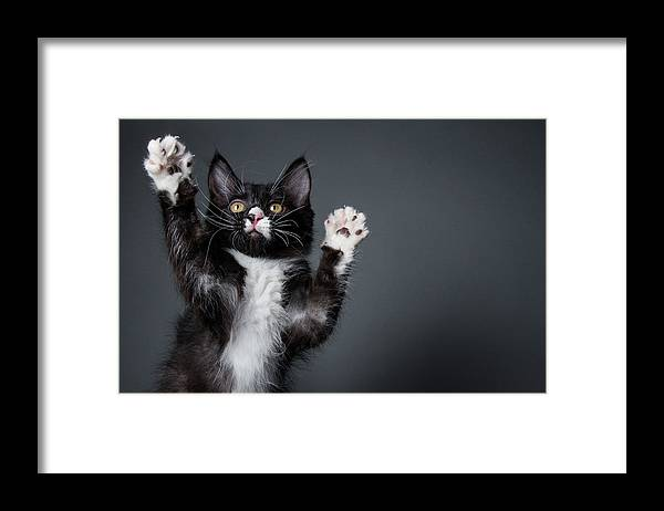 Pets Framed Print featuring the photograph Cute Kitten Playing - The Amanda by Amandafoundation.org