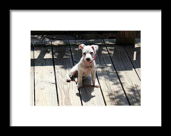 Dog Framed Print featuring the photograph Cute by Kristie Briones