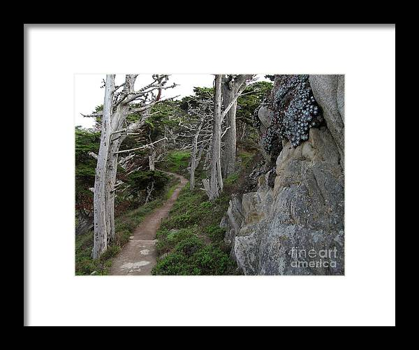 Point Lobos Framed Print featuring the photograph Cypress Grove Trail by James B Toy