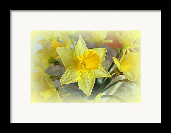 Daffodil Framed Print featuring the photograph Daffodil by Bishopston Fine Art