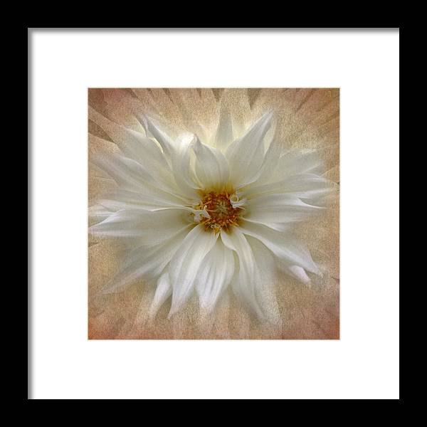 Floral Framed Print featuring the photograph Dahlia Burst by Angie Vogel