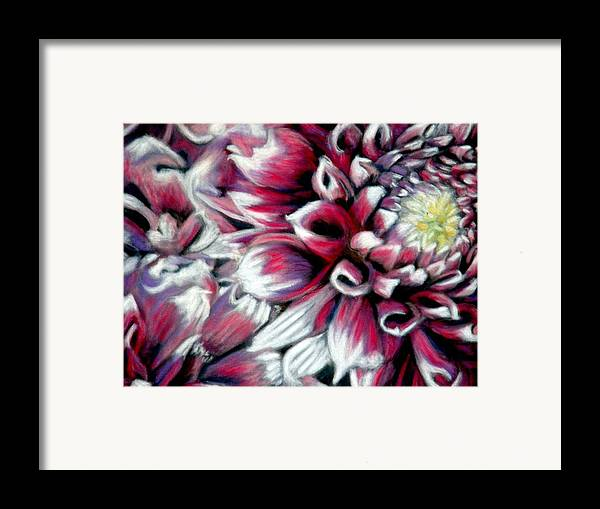 Dahlias Framed Print featuring the pastel Dahlias In Pastel by Antonia Citrino