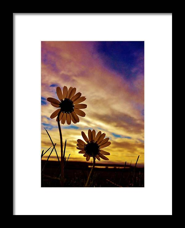 Flower Framed Print featuring the photograph Daisies At Sundown by Sarah Pemberton